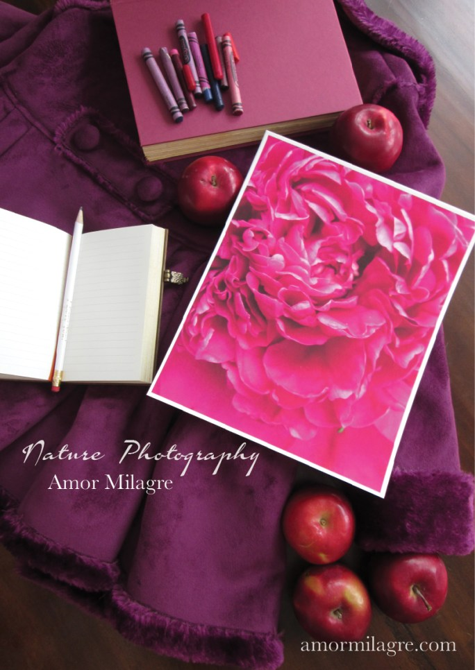 Amor Milagre Magenta Peony Flower Petals nature photography amormilagre.com 2