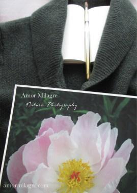 Amor Milagre Soft Pale Pink Peony Flower Bloom nature photography 3 amormilagre.com