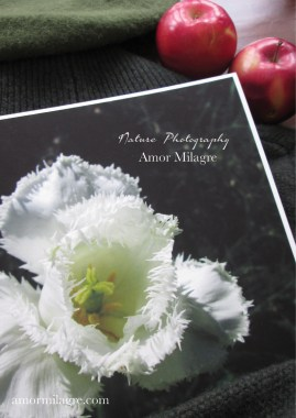 Amor Milagre White Fringed Daffodil Garden Photography Art Print amormilagre.com 1