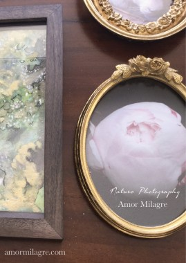 Pale Pink Peony Bud Nature Photography Art Print Greeting Card Amor Milagre amormilagre.com