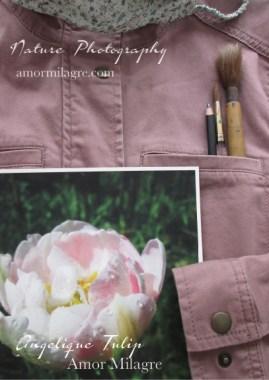 Pink Angelique Tulip Garden Photography Art Print Amor Milagre amormilagre.com wear a mask