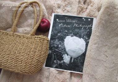 White Fringed Honeymoon Tulip Garden Photography 2 Art Print Amor Milagre amormilagre.com