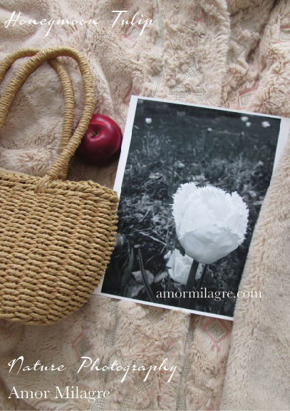 White Fringed Honeymoon Tulip Garden Photography Art Print Amor Milagre amormilagre.com