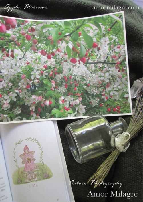 Amor Milagre Apple Blossom Tree Garden Nature Flower Photography Art Print amormilagre.com 1
