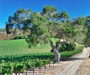 The Bernardus Winery in Carmel Valley