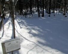 snowcoveredvernalpondKHNP25Jan2015