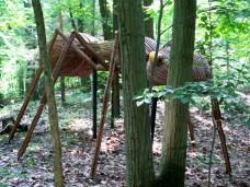 gardeninwoodsbigbugsanteyejuly2008