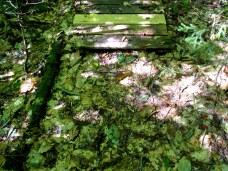 fallenbeechleavesbridgeKHNP19Sept2015