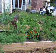 raised vegetable beds, Sept. 2015
