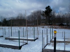 raised veggie beds, Feb. 2013