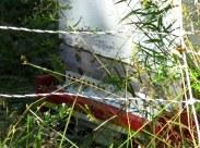 beesbottombeehivebedrockgarden17sept2016
