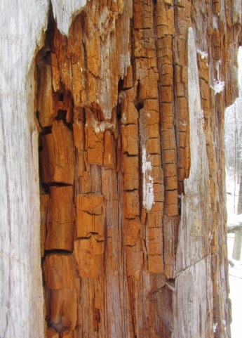 crackled wood under the tree bark