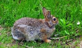 rabbitsideflowerTrustomPondNWRSouthKingstownRI8May2017