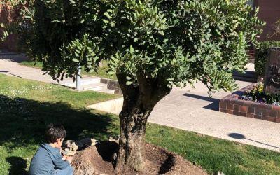 Donación «Árbol de la Memoria»: Algarrobo – Entrega plantas a los alumnos.