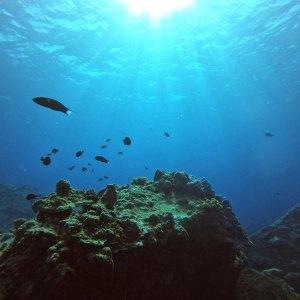 Paysage sous-marin de corail sur murale imprimée sur vinyle autocollant