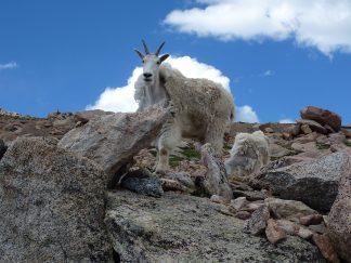Colorado July 2011 (25)