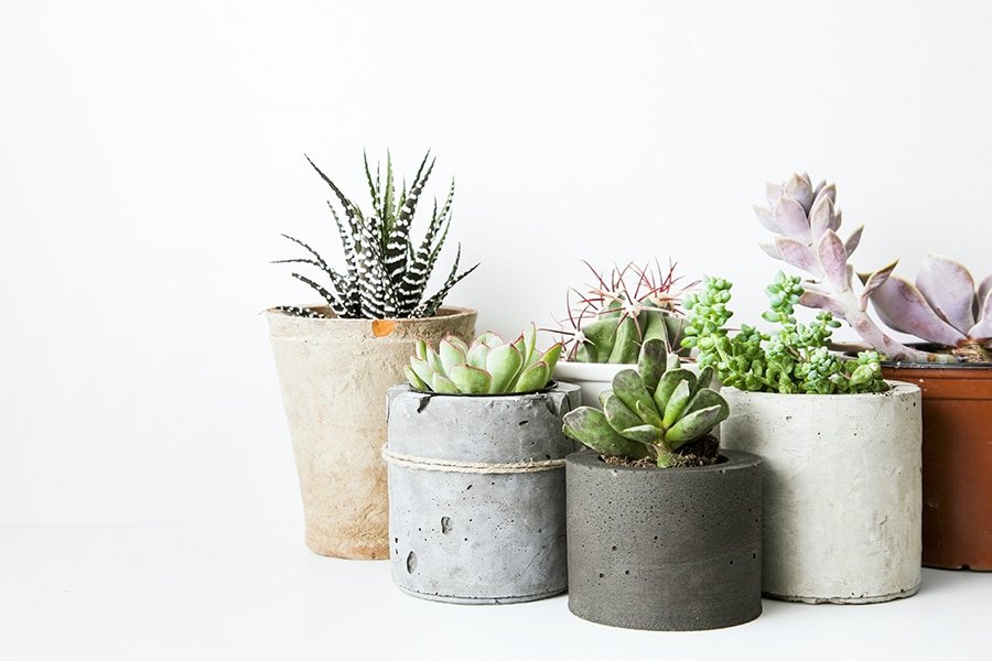 How to Decorate a Space with Houseplants | Ampli