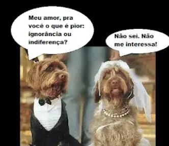 Memes engraçados de animais cachorros casando