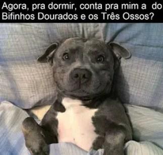 Memes engraçados de animais cachorro na cama
