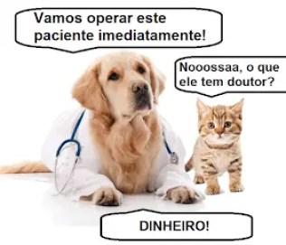 Memes engraçados de animais cão medico