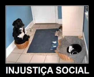 Memes engraçados de animais gato na toda com cachorro