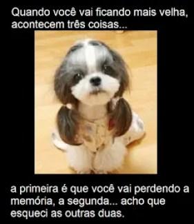 Memes engraçados de animais Cachorra rapunseu