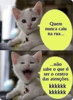 Gatinho miau
