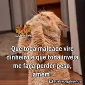 memes engraçados de animais gato orando