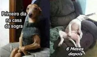 memes engraçados de animais cão na casa da sogra