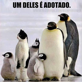 Memes engraçados de animais pinguins