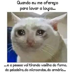 Memes engraçados de animais gato chorando