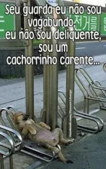 memes engraçados de animais cachorro folgado