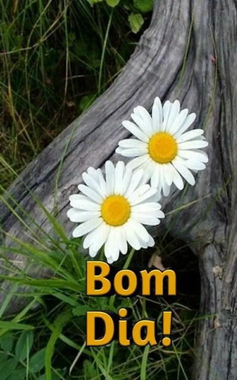 Bom dia flores no tronco seco