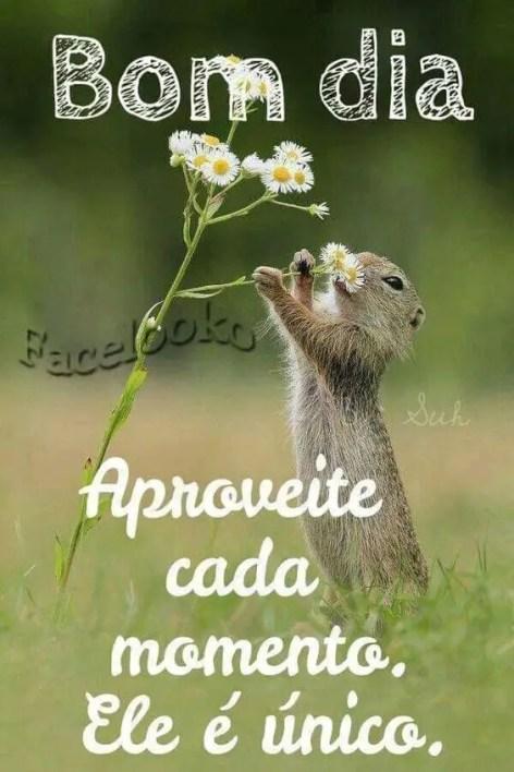 Bom dia! um animalzinho pegando a flor