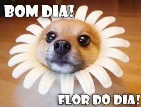 Bom dia, flor do dia!