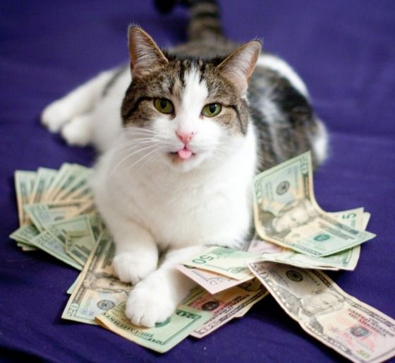 Gato com notas de dinheiro