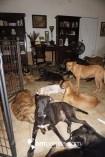 perros 12