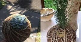 Usted puede escoger entre la variedad de plantas