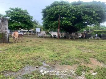 Animales de producción en el albergue. Foto: CNE