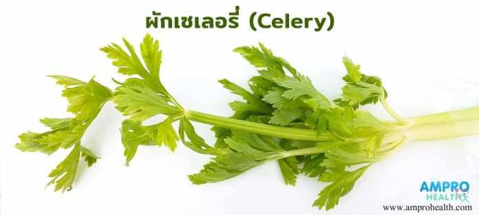 เซเลอรี่ (Celery)