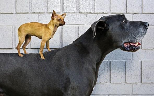 small-dog-large-dog
