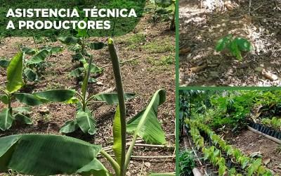 Entregamos plantas y asistencia técnica, logrando reforestar 2 manzanas.