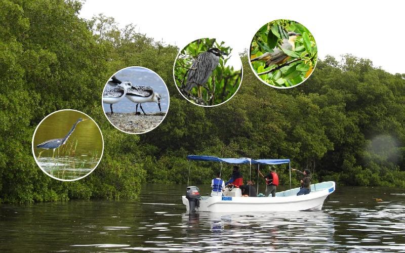 Inauguramos Proyecto de Inventario de Aves de La Laguna de Alvarado.