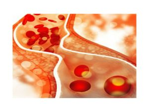 Cholesterol And Testosterone