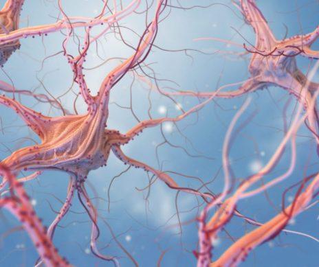Synapse XT Supplement