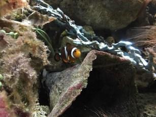 fishypic3