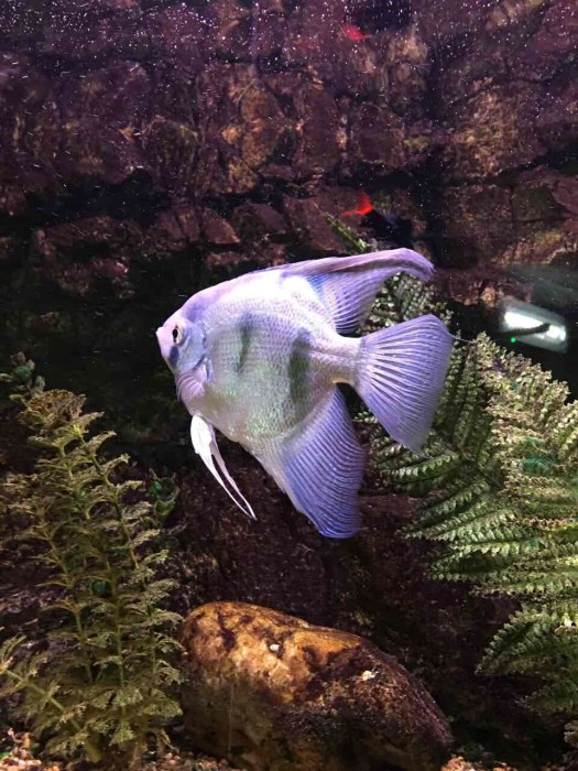 fishypic4
