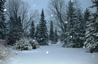 WinterSolsticeMorn