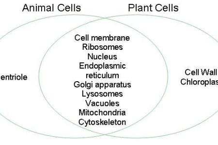 Diagram Of Animal Cell For Class 8 Path Decorations Pictures