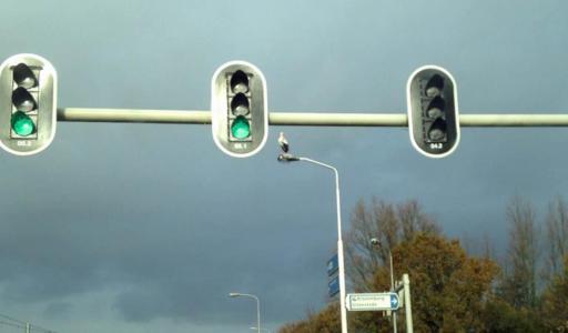 Verkeerslichten ooievaar